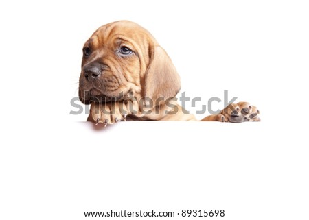 Doggie sends a message! - stock photo