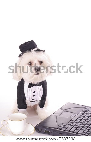 Doggy Business - stock photo
