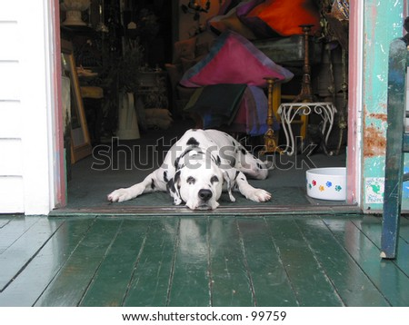 doggy in a doorway - stock photo