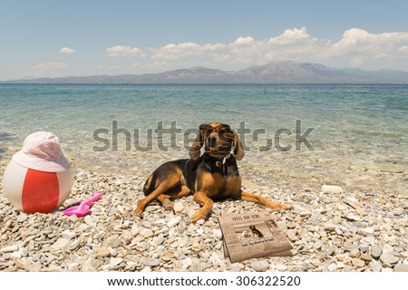 Dogs allowed on beach. A funny looking portrait with a dog wearing sunglasses reading the news.  - stock photo