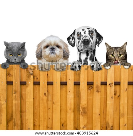 dogs and cats look through a fence -- isolated - stock photo