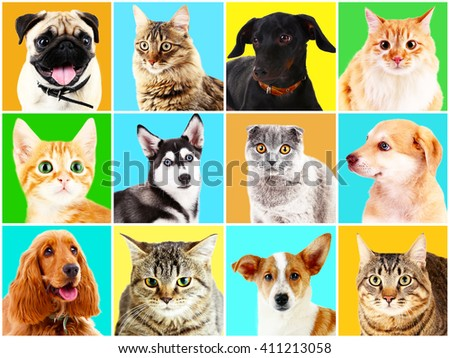 Dogs and cats portraits on bright backgrounds - stock photo