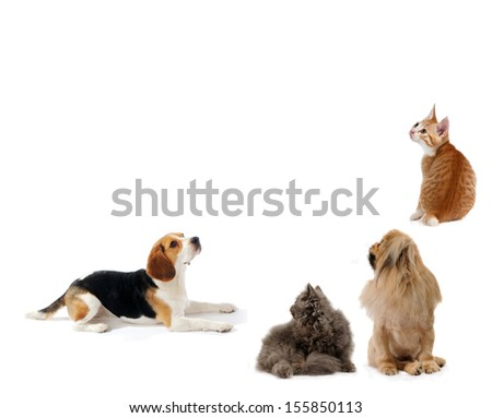 Dogs and cats together, isolated on white background, sit and laying down and looking up