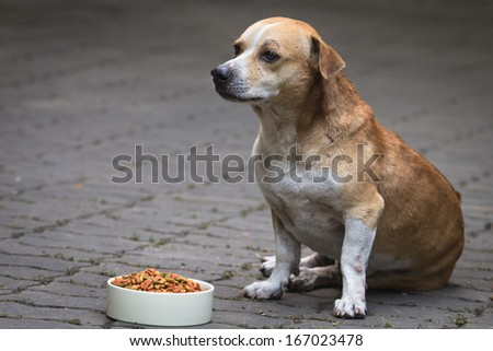 Dogs and dogs food in a white bowl. - stock photo