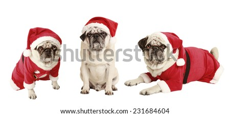 dogs as a Christmas gift, exempted, white background, dressed as santa claus, cutout - stock photo