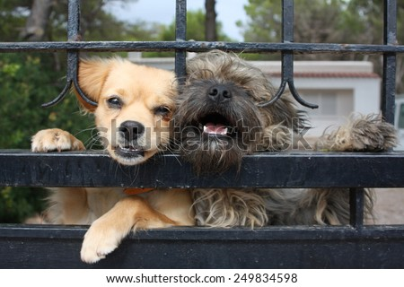 dogs behind a fence - stock photo
