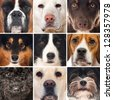 Dogs collage - stock photo
