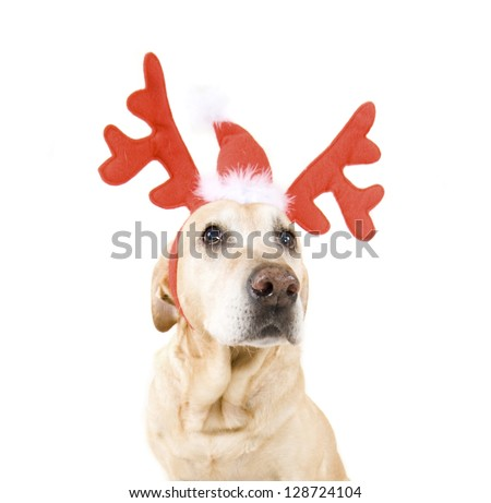 dogs dressed up in reindeer antlers - stock photo
