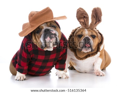 dogs dressed up like a hunter and a rabbit on white background