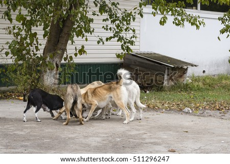 Dogs fights for food outside shop,Chernobyl