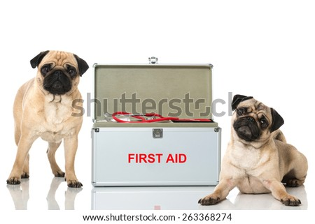 Dogs first aid - stock photo