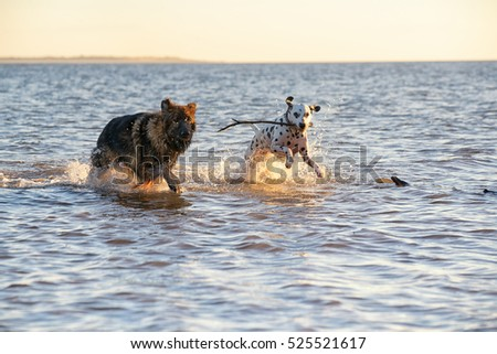 Dogs friends running and chasing each other in the sea playing nicely together
