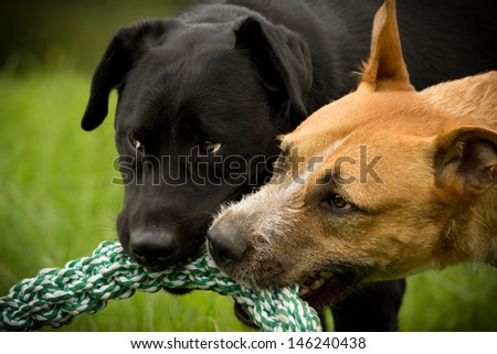 dogs game - stock photo