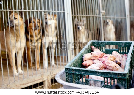 dogs in cages waiting for feeding. stray dogs in the dog shelter - stock photo
