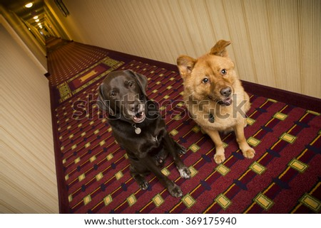 Dogs in hotel corridor - stock photo