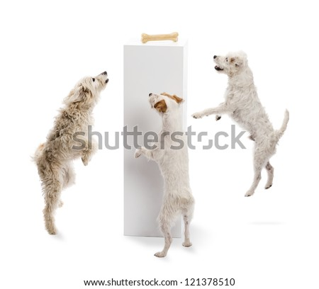 Dogs jumping and looking at a bone on a pedestal against white background - stock photo