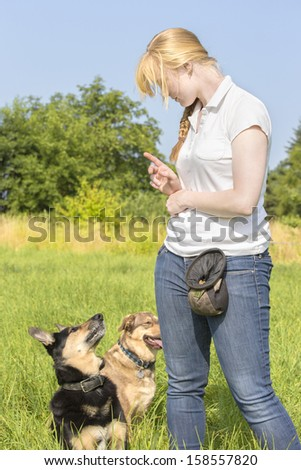 Dogs listen to the commands of the female dog trainer - stock photo