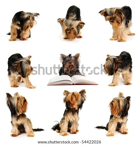 Dogs look to the center - stock photo