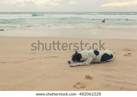Dogs on the beach, Surin beach, Phuket, Thailand