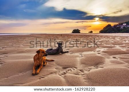 Dogs on the beach under sunset gloomy sky  - stock photo
