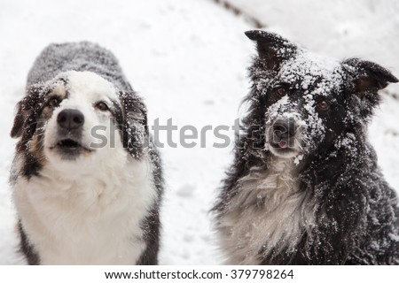 dogs outside in winter covered in snow. one barks to complain he wants in - stock photo