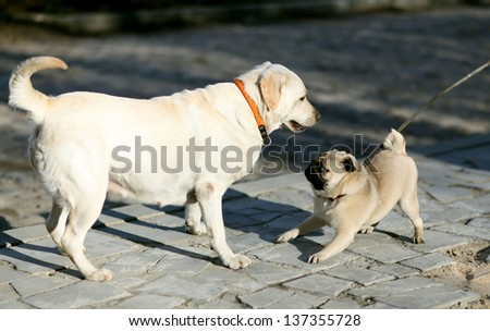 dogs play - stock photo