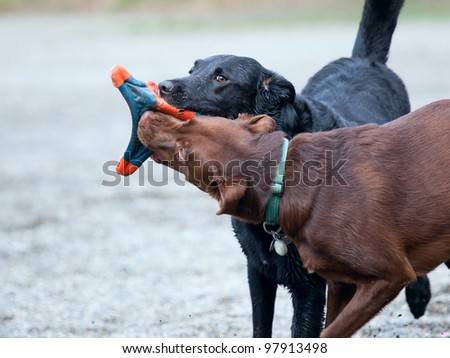 Dogs playing at a park - stock photo
