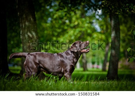 dogs playing in nature - stock photo