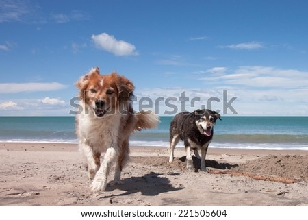 dogs playing in the sand on a sunny day at a beach  - stock photo