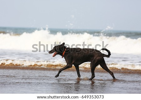 Dogs playing on the seashore during the day