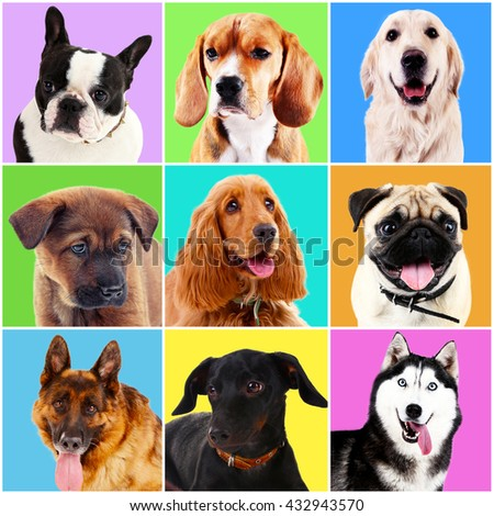 Dogs portraits on bright backgrounds - stock photo