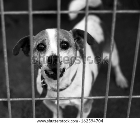 Dogs Shelter - stock photo