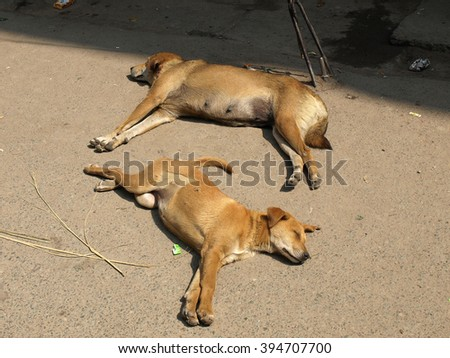 dogs sleeping on the streets of New Delhi       - stock photo