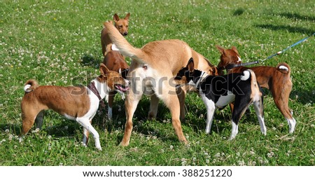 dogs sniffing each other  - stock photo