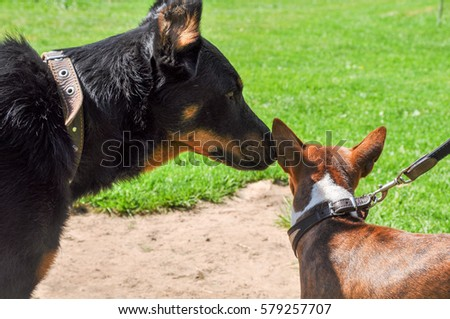 dogs sniffing each other in the nose