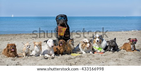 dogs standing on the beach, in France - stock photo