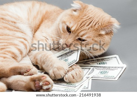 Dollar and a cat - stock photo