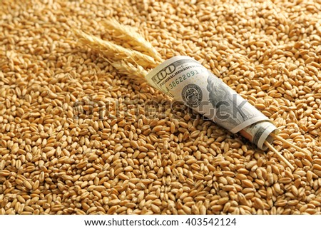 Dollar banknote and wheat grains. Agricultural income concept - stock photo
