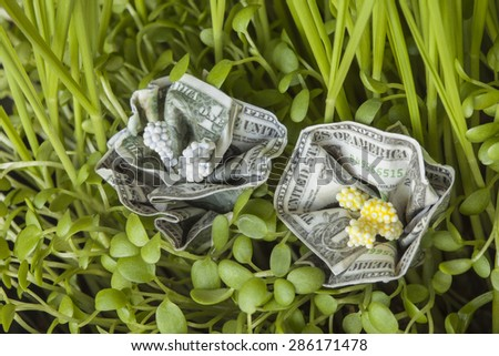 Dollar flowers blooming among grass - stock photo