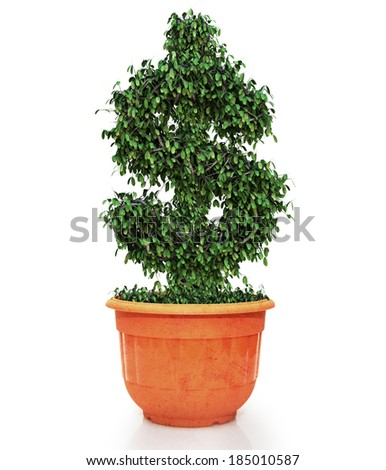 dollar money symbol tree on pot plant