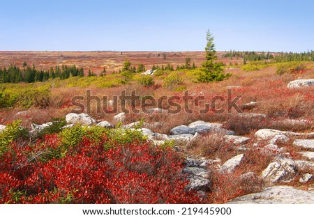 Dolly Sods West Virginia Autumn Landscape  - stock photo
