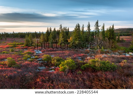 Dolly Sods Wilderness Area West Virginia Autumn Scenic - stock photo