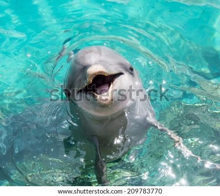 dolphin close ups - stock photo