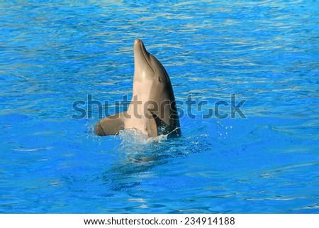Dolphin dancing in aquarium - stock photo