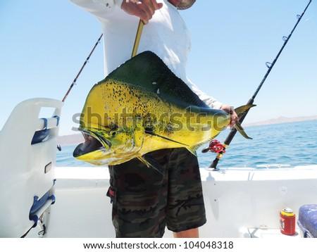 Dolphin Fish Landed - stock photo