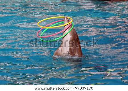 dolphin from around the nose - stock photo
