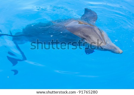 dolphin in blue waters