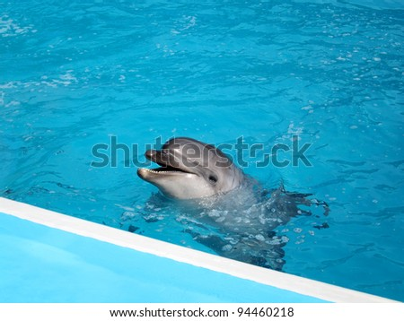 Dolphin in pool - stock photo
