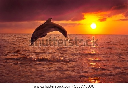 dolphin, in the background a beautiful sunset - stock photo