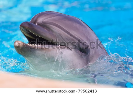 dolphin in the pool - stock photo